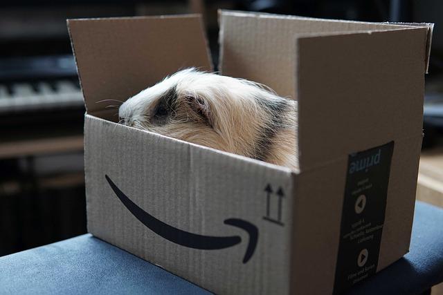 Caster Amazon Prime : Comment envoyer un flux multimédia sur sa télé?
